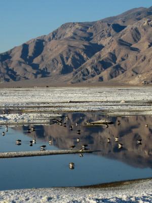 Owens Lake Dust Mitigation Project (OLDMP)
