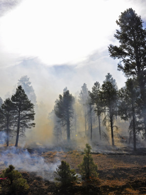 Arizona DEQ Smoke Management System