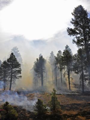 Arizona DEQ Smoke Management System